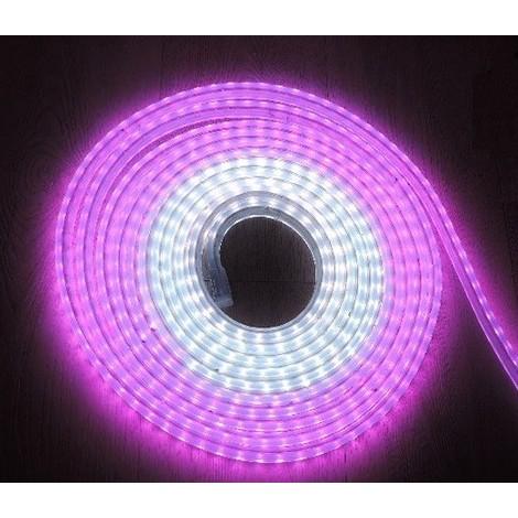 Kit cordon lumineux multicolore RVB 100W animé longueur 10m 10 fonctions mémoire alim 24V tube transparent BLACHERE NLEDRGB10