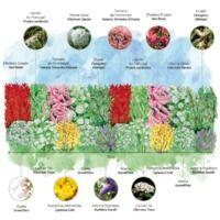 Kit Haie 4 Saisons - 20 Jeunes Plants -