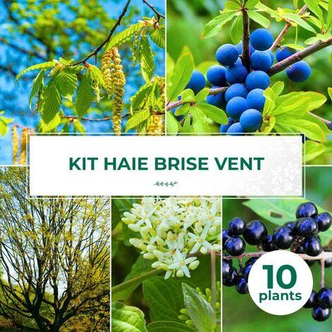 Kit Haie Brise-Vent - 10 Jeunes Plants -