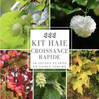 Kit Haie Croissance Rapide - 10 Jeunes Plants -