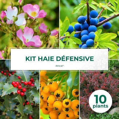 Kit Haie Défensive - 10 Jeunes Plants -