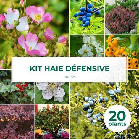 Kit Haie Défensive - 20 Jeunes Plants -