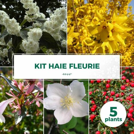 Kit Haie Fleurie - 5 Jeunes Plants -