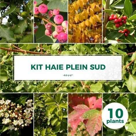 Kit Haie Plein Sud - 10 Jeunes Plants -