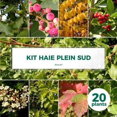Kit Haie Plein Sud - 20 Jeunes Plants -