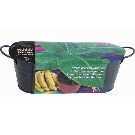 Kit jardinière pour bananier - Astuceo
