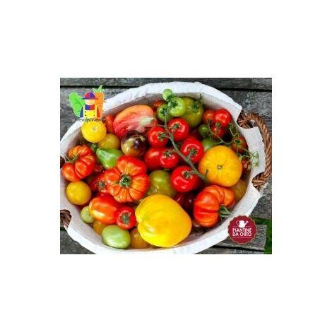 Kit Pomodori che passione - The Young Farmer