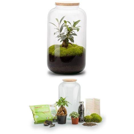 Kit terrarium plantes Bonbonne M (23 x 41 cm)