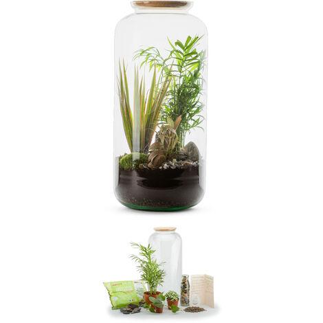 Kit terrarium plantes Bonbonne mix L (23 x 51 cm)