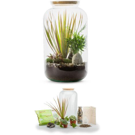 Kit terrarium plantes Bonbonne mix M (23 x 41 cm)