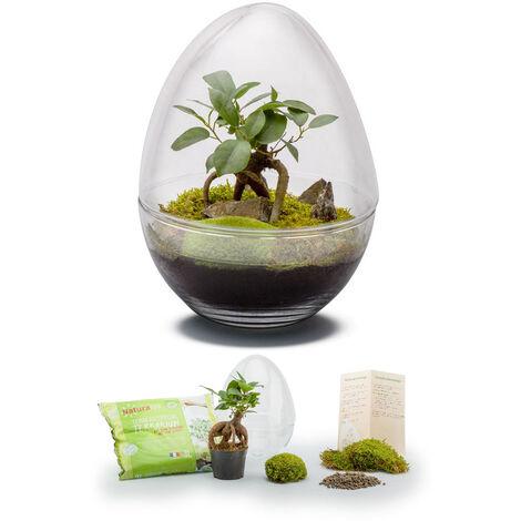 Kit terrarium plantes Diplo M (29 x 21 cm)