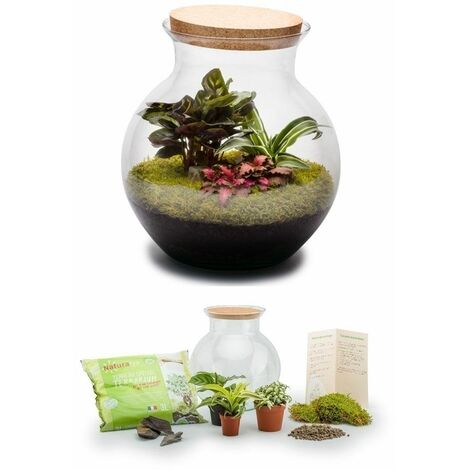 Kit terrarium plantes Havana L (28 x 27 cm)