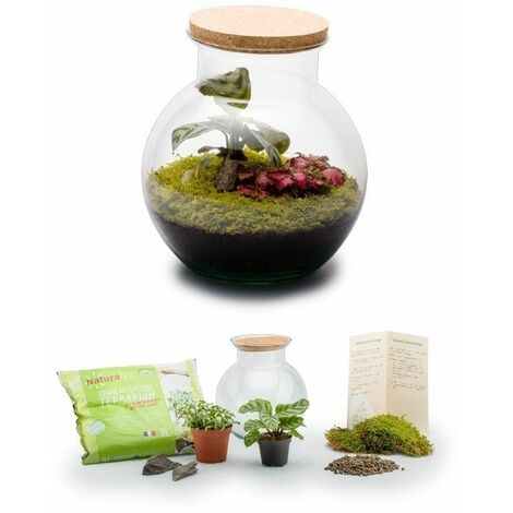 Kit terrarium plantes Havana S (20 x 19 cm)
