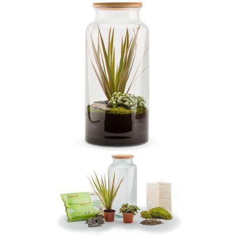 Kit terrarium plantes Jungle mix L (19 x 41 cm)