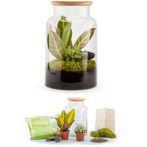 Kit terrarium plantes Jungle mix M (19 x 31 cm)