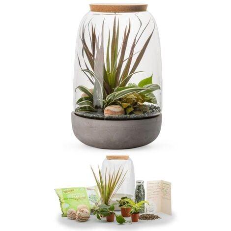 Kit terrarium plantes Opendo L (23 x 36 cm)