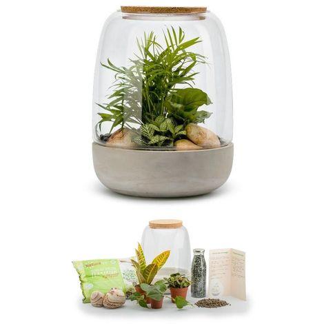 Kit terrarium plantes Opendo M (24 x 31 cm)