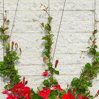 Kit Treillis Métallique Pour Plantes Grimpantes Longueur 10 M