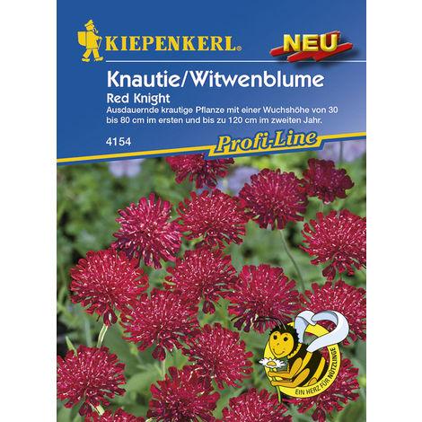 Knautie / Witwenblume Red Knight
