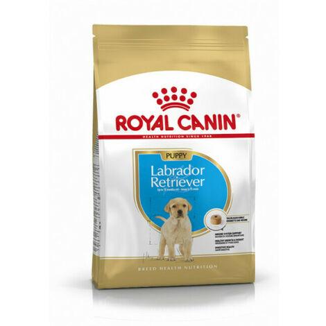 Labrador Retriever Junior - 12kg