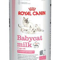 Lait Baby Cat Milk pour Chaton - Royal Canin - 300g