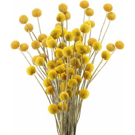 LangRay 40 Tiges Fleurs Séchées Naturelles Fleurs de Craspedia Séchées Billy Button Balles Bouquet Floral pour Noël Mariage Hiver Maison Décoration Florale