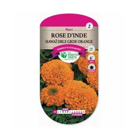 Les doigts verts Semence Rose d'Inde Hawai Double Orange