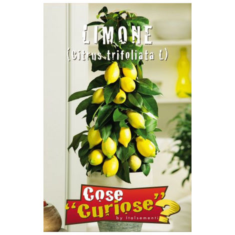 Limone (Citrus limon) (Semente)