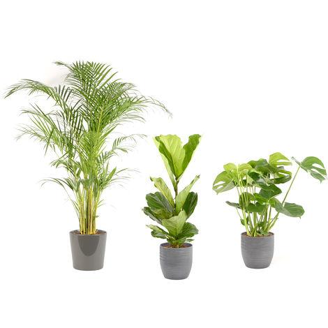 Lot de plantes d'intérieur pour Maison ou Bureau - 1