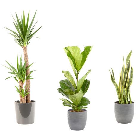 Lot de plantes d'intérieur pour Maison ou Bureau - 2