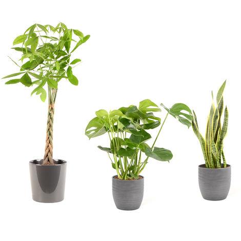 Lot de plantes d'intérieur pour Maison ou Bureau - 3