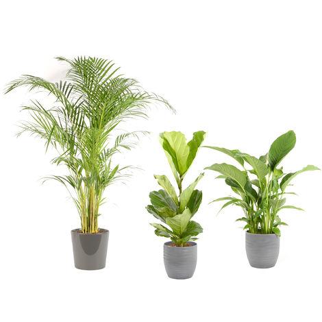 Lot de plantes d'intérieur pour Maison ou Bureau - 4