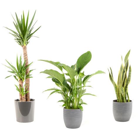 Lot de plantes d'intérieur pour Maison ou Bureau - 5