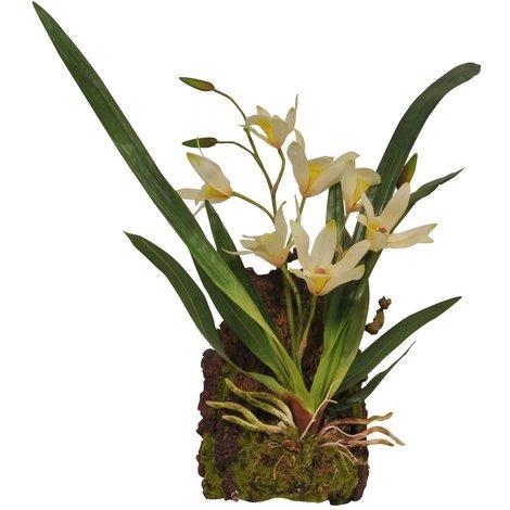 Lucky Reptile - Hänge-Orchidee weiß