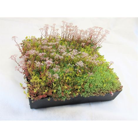 M-Tray SEDUM / Wildflower Green Roof Module 500 x 500 x 100mm (delivery cost per pallet of 42 units)