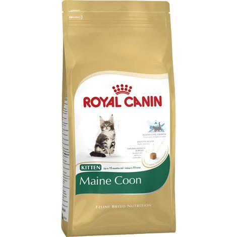 Maine Coon Kitten - 2kg