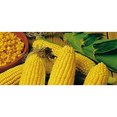 Mais pop corn