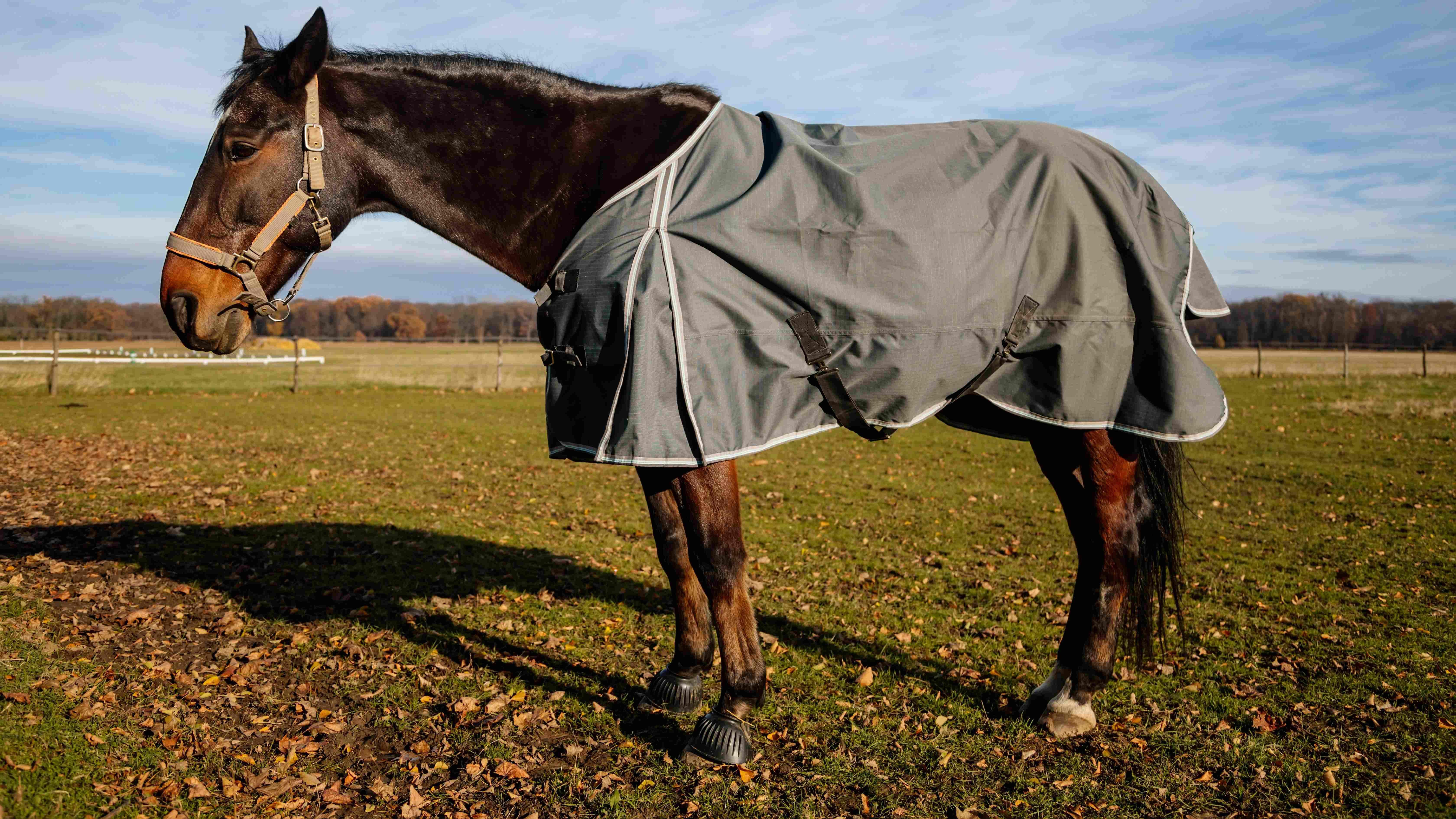 Comment choisir  une couverture pour cheval