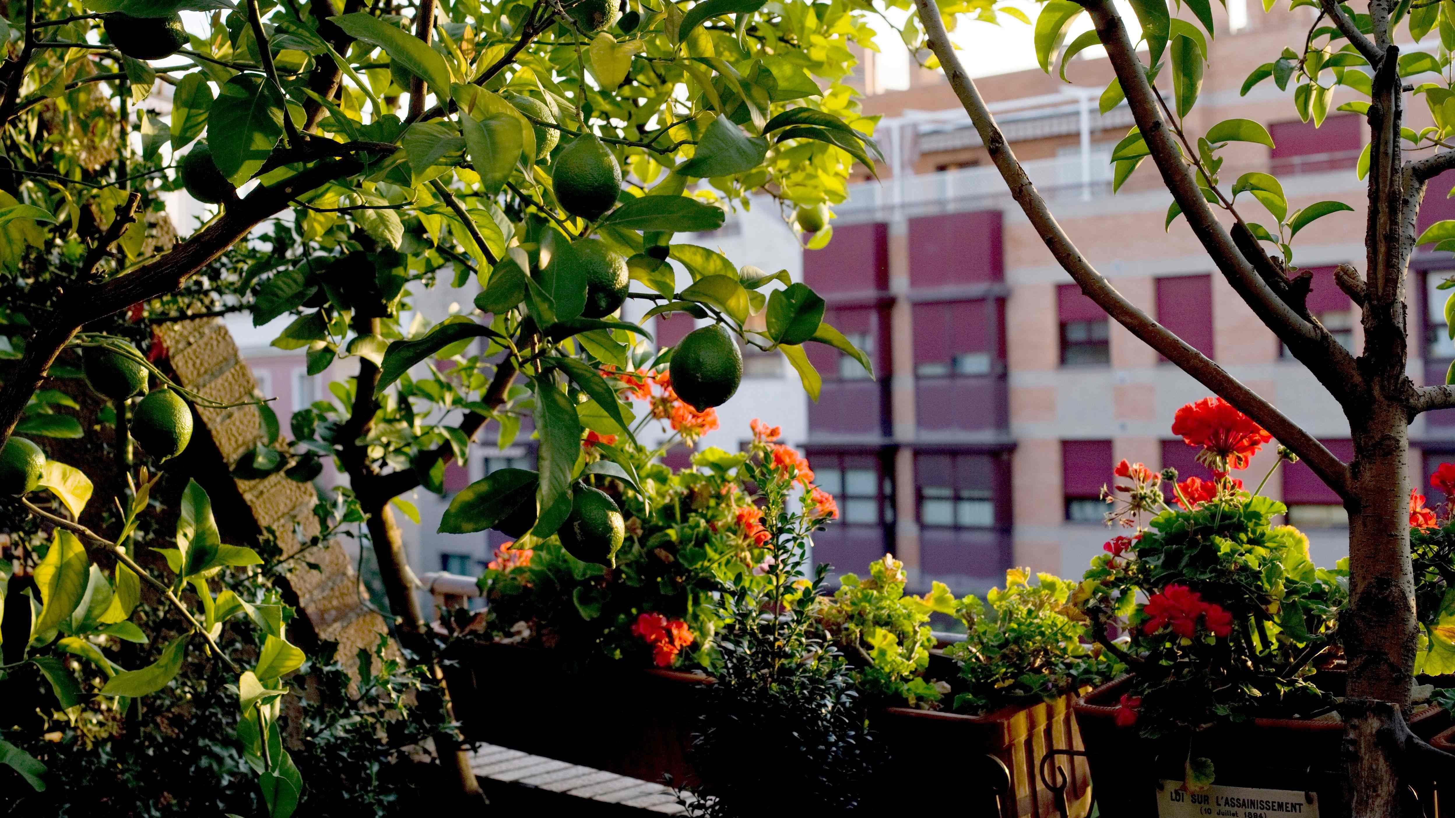 Cómo elegir árboles y arbustos para balcones y terrazas