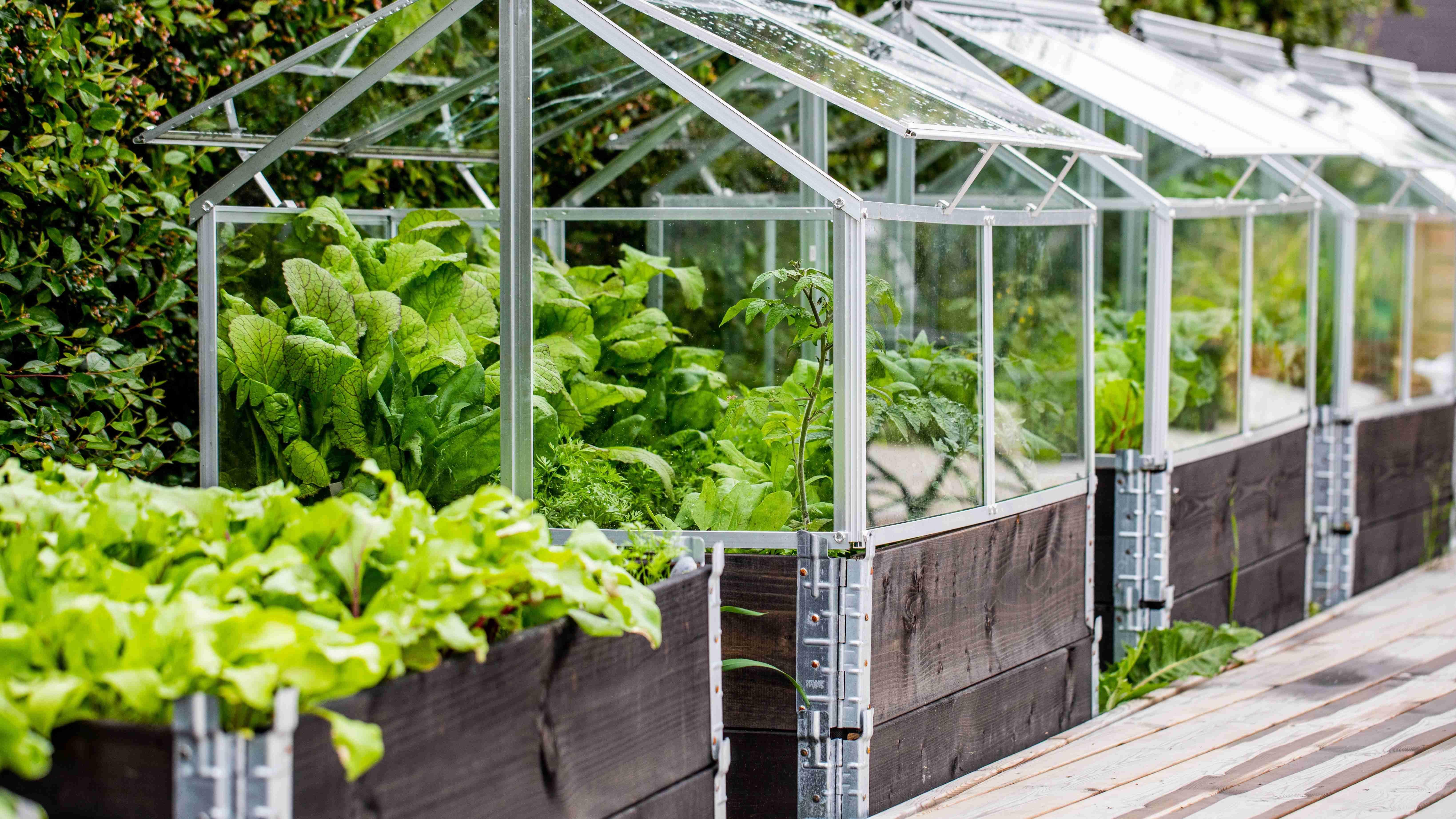 Quels légumes  cultiver sous serre