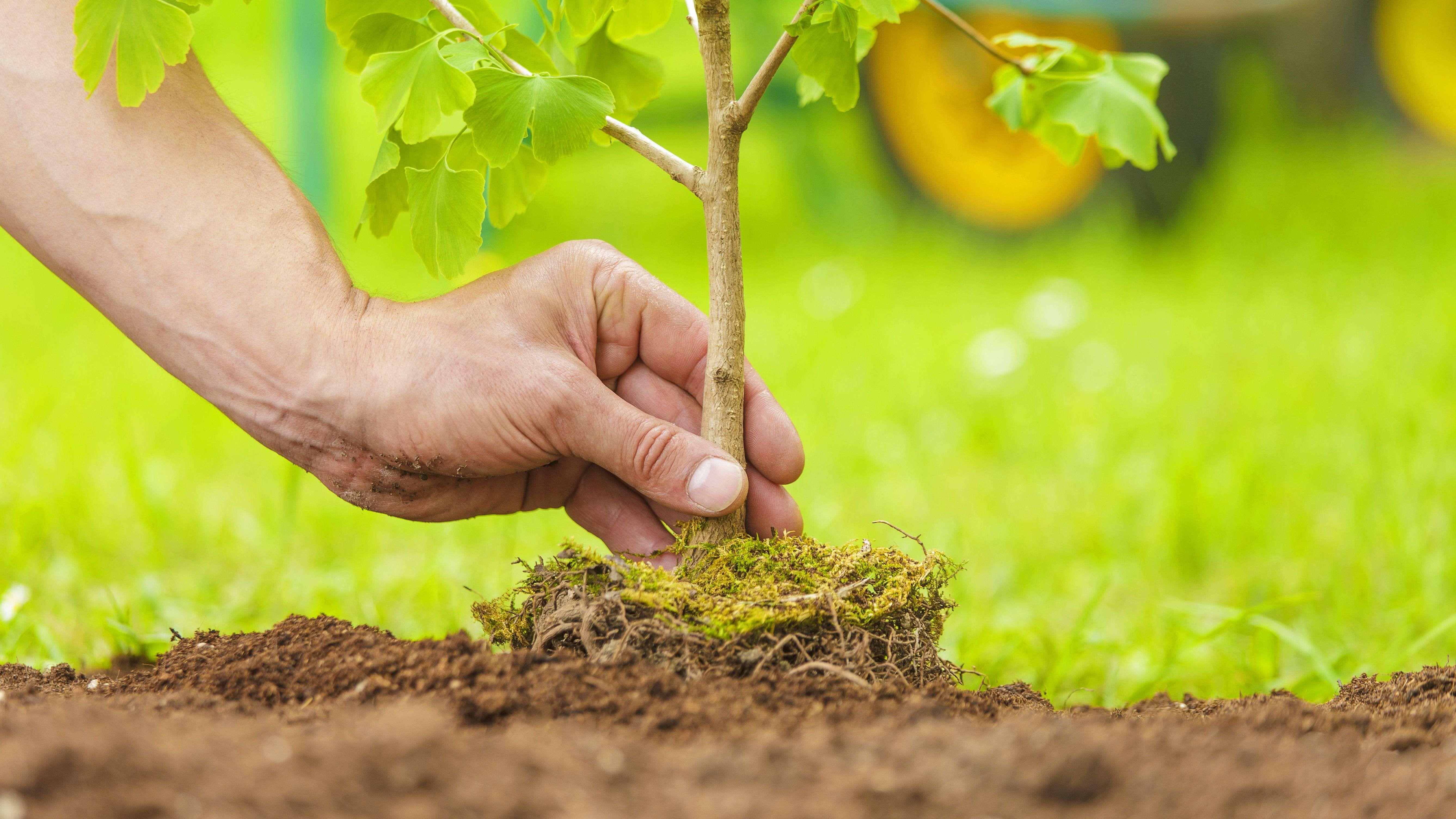 Cuándo plantar un árbol