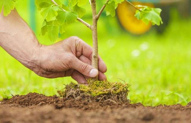 ¿Cuándo plantar un árbol?