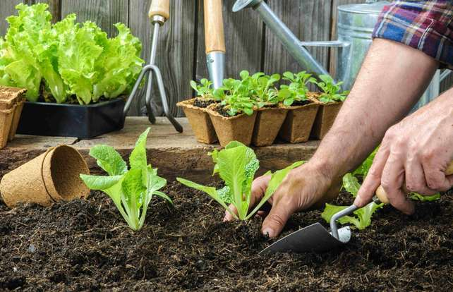 What to plant in the vegetable garden in March