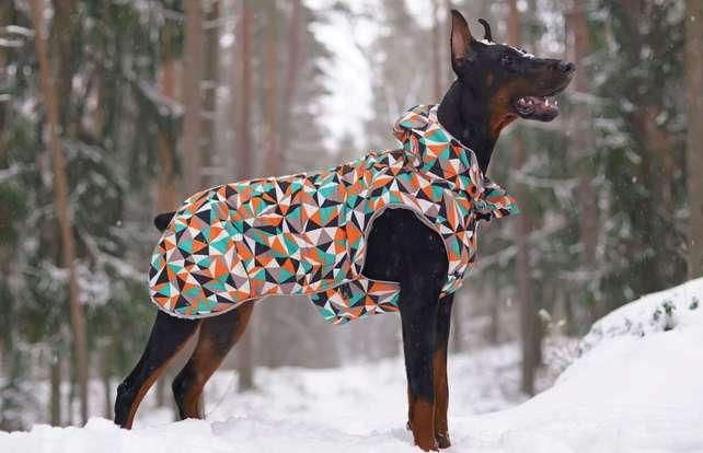 Dog clothing buying guide