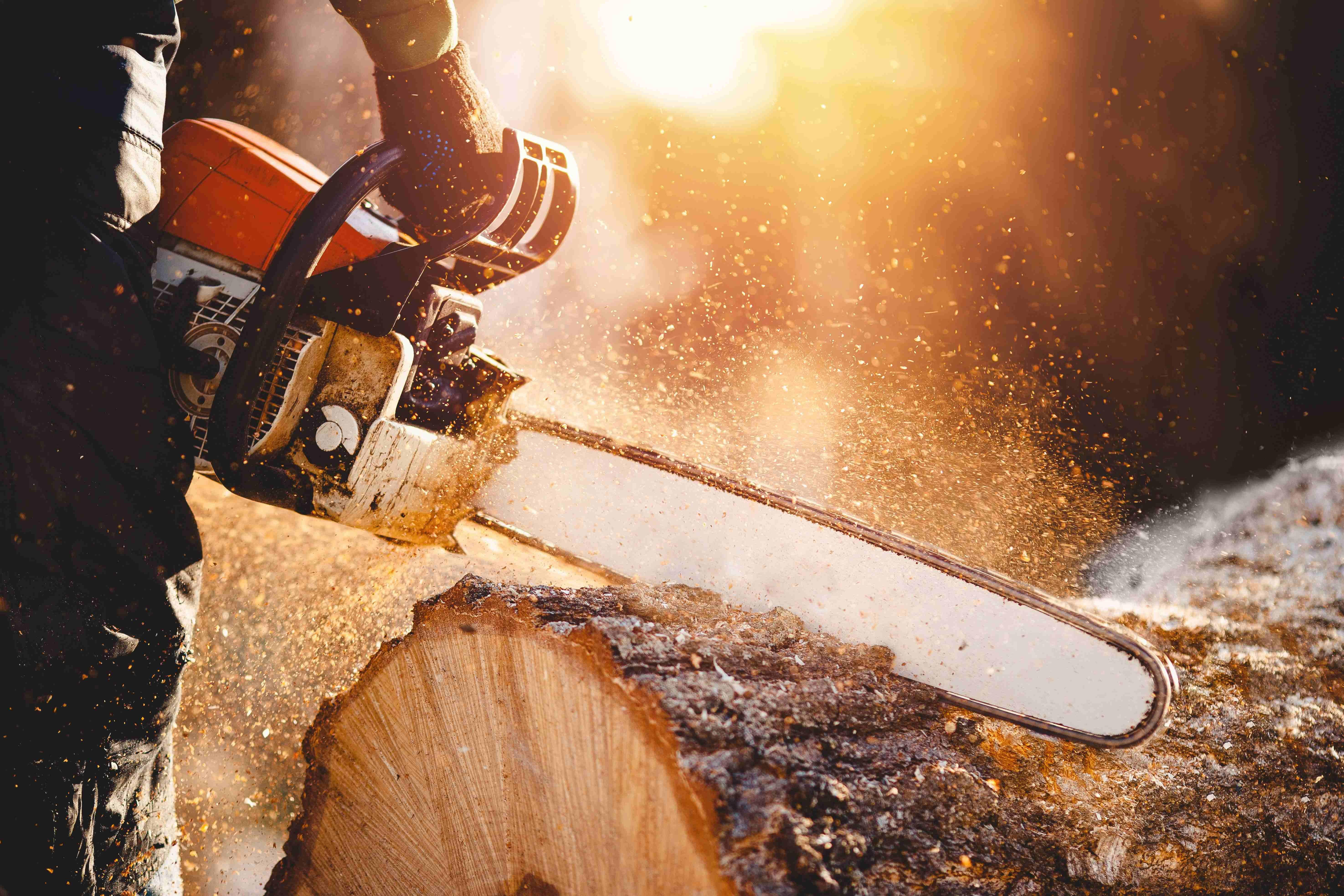 Chainsaw or power pruner: which is right for you?