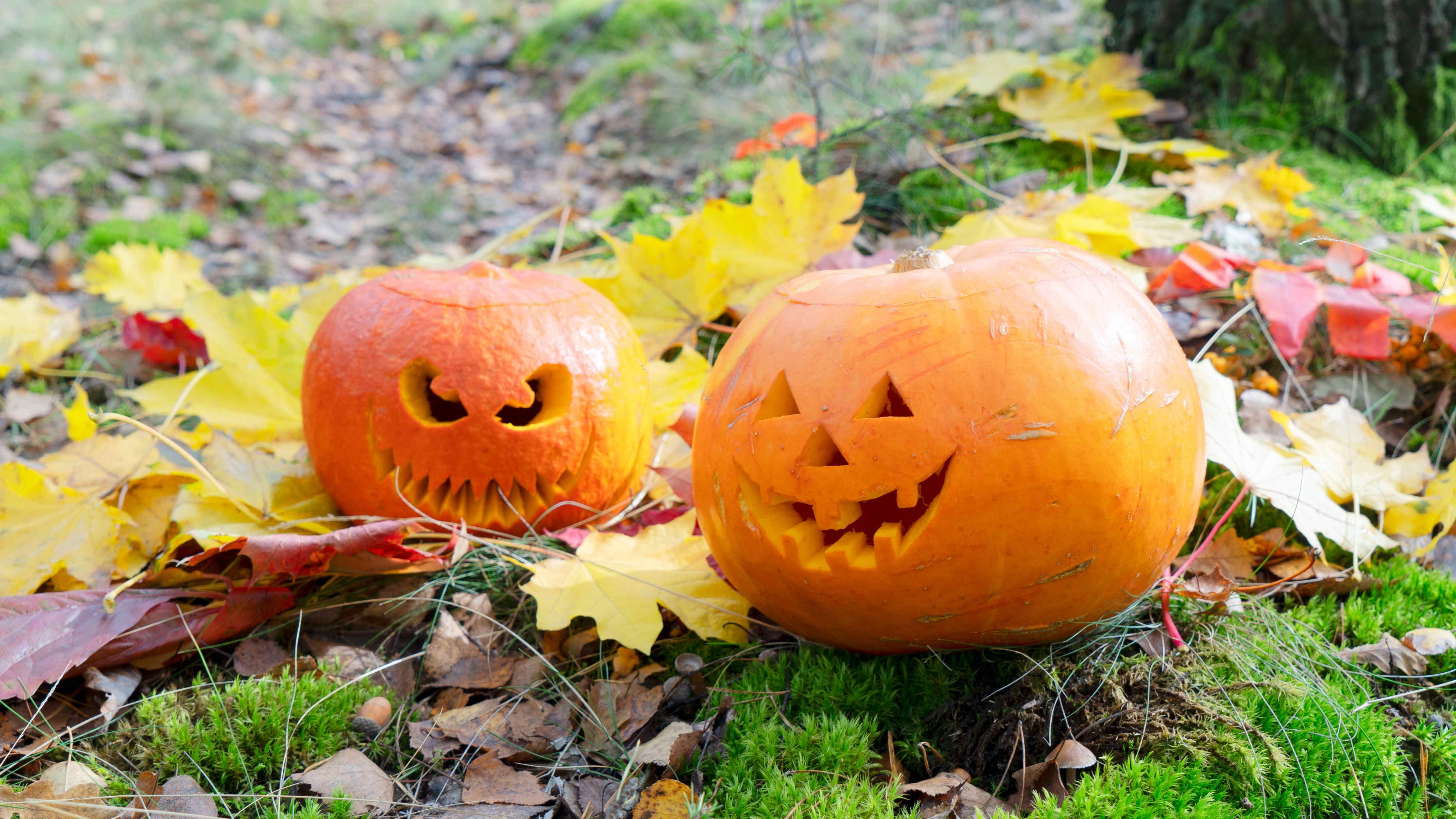 October: your home and garden checklist