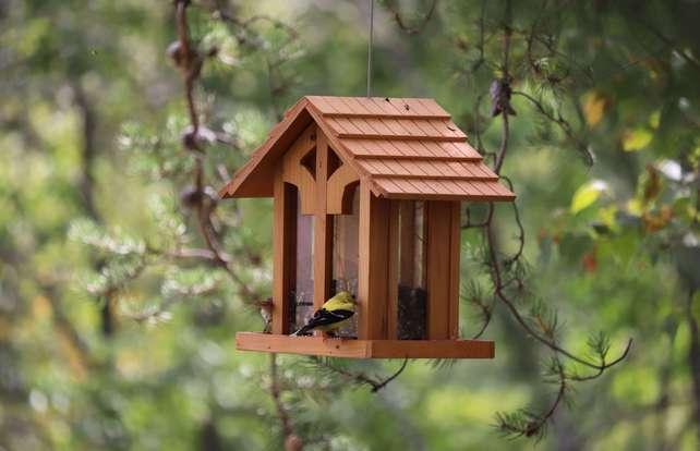 ¿Cómo elegir una caja nido y un comedero?