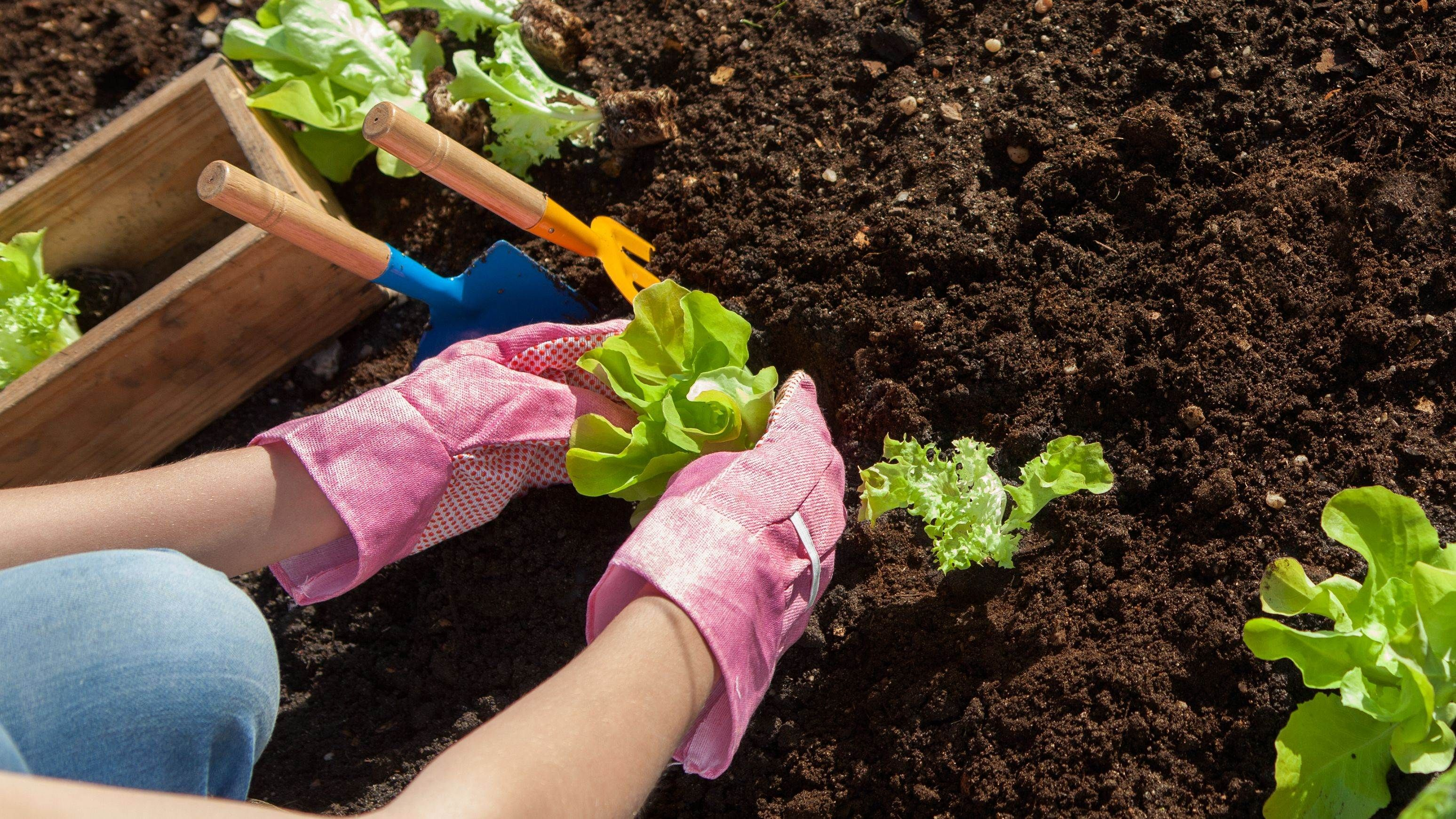 What to plant and sow in June