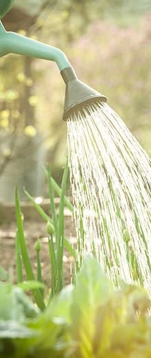 Come scegliere il metodo di irrigazione