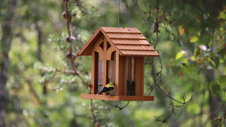 Come scegliere una casetta nido o una mangiatoia per uccelli